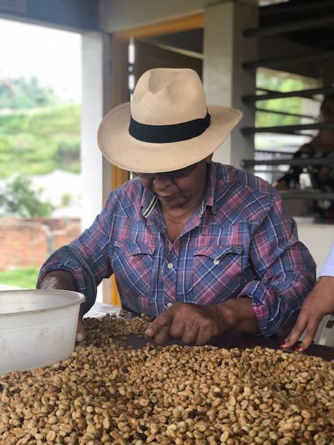seleccion granos de cafe, finca buenos aires salento